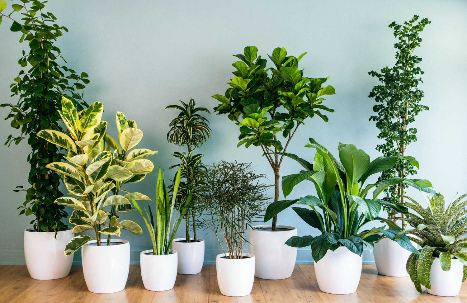Houseplants A Breath of Fresh Air Houseplants